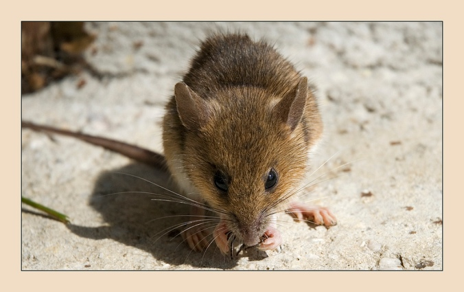 A little mouse ... hihihi :)